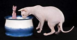 A Sphynx cat with an EBI cat drinking fountain